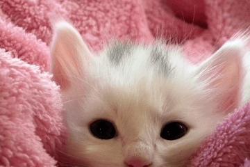 给小猫起名字可爱大全