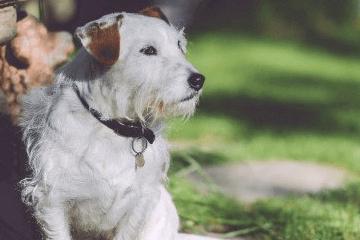 大型犬品种大全带名字