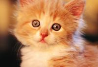 好听的宠物猫名字大全最新版