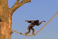 属猴什么时辰出生最好