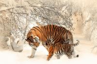属虎和什么属相相克