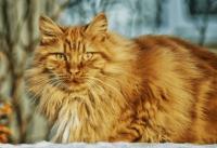 给猫起一个霸气的名字