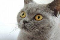 有寓意的猫咪名字大全