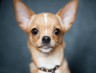 狗狗可爱又招财的名字
