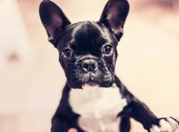 狗狗时髦好听的英文名