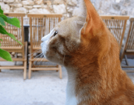 公猫霸气高贵的名字