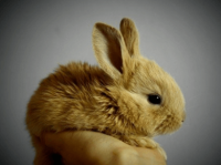 宠物兔子起名大全