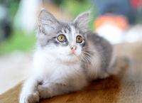 给小猫取个很酷的名字
