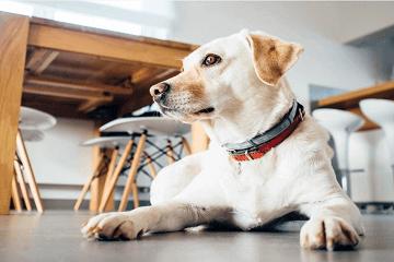 男狗狗好听的独特名字