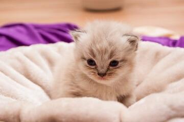 猫咪起名字大全可爱的