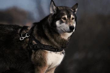 超奇葩狗狗的名字大全