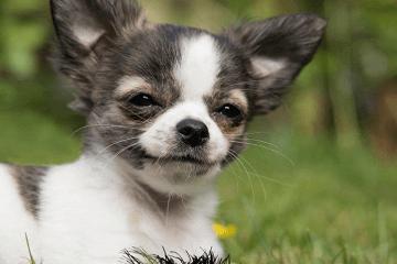 洋气好听的狗狗英文名
