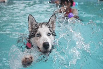 狗狗名字有寓意有深度