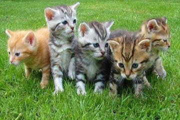 猫名字叫什么好听