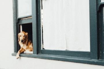 梦见狗咬手是什么意思