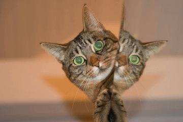 梦见猫咬我手是什么意思