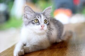 英短蓝猫名字大全