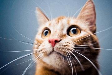 给猫猫取一个好养活的名