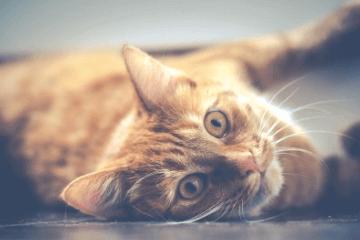 猫咪名字奇葩搞笑