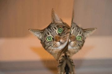 猫咪好听的独特名字