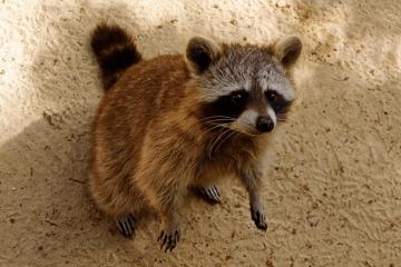 好听又可爱的狐狸名字