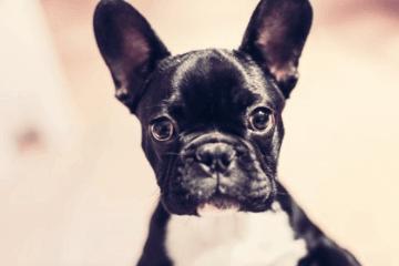 帮狗狗取英文名字公的