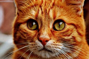 母猫起名字大全洋气