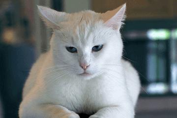 比较萌的猫名字大全