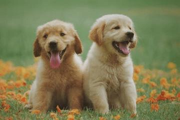 狗狗名字大全2021最新版的
