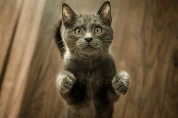 好听的蓝猫公猫名字