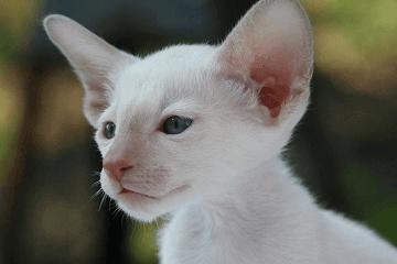 小猫名字大全可爱招财