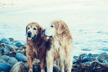 纪念爱情的狗名字