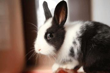 2016年属兔的人多大