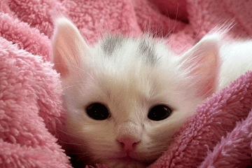 小猫名字大全英文名字