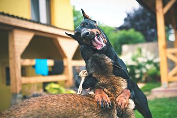 狗取名招财又吉利的名字