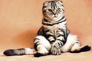 好听的宠物名字萌萌哒母猫