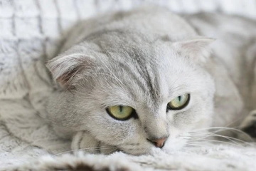 可爱又沙雕的猫咪名字
