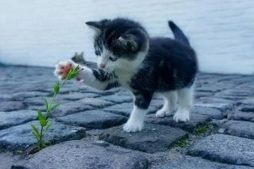 猫名字吉利好运财旺