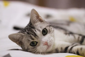 带来好运的女猫咪名字
