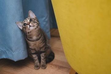 猫猫的好听的名字