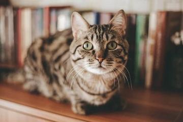 女猫咪的名字要萌点的