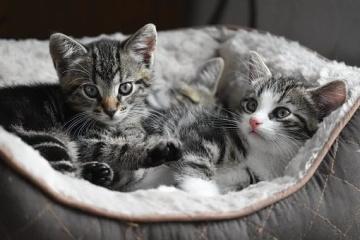 猫咪名字大全公猫