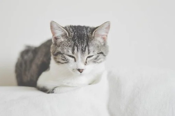 日系猫咪名字