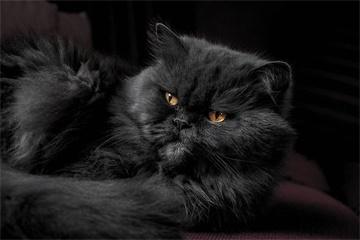 猫取名字带好运的意思