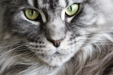 关于食物的猫咪名字大全