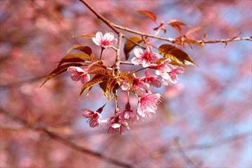 2021新年春节祝福语