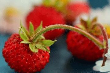 水果产品起名字