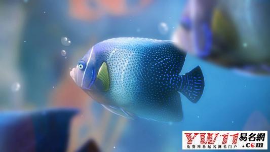 梦见抓鱼是什么意思-周公解梦大全