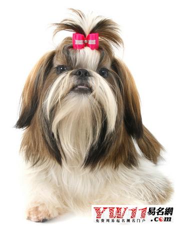 宠物狗日本名字