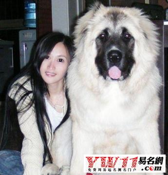 宠物狗非主流名